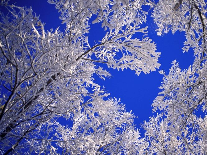 landscapes nature winter snow frost blue skies wallpaper