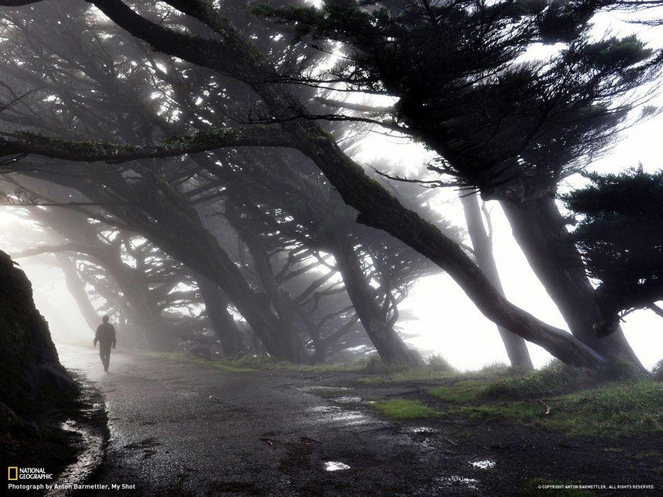 California National Geographic wallpaper