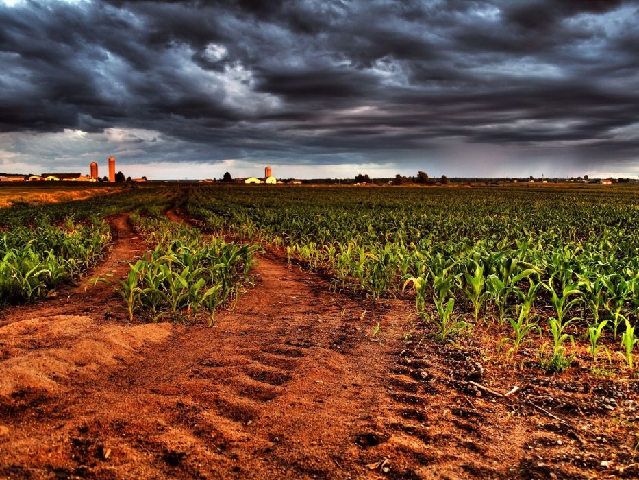 landscapes nature fields overcast cornfield wallpaper