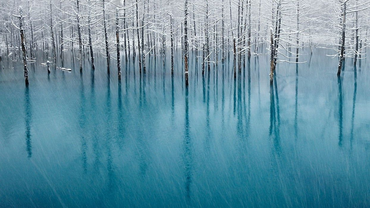 nature winter trees forests wallpaper