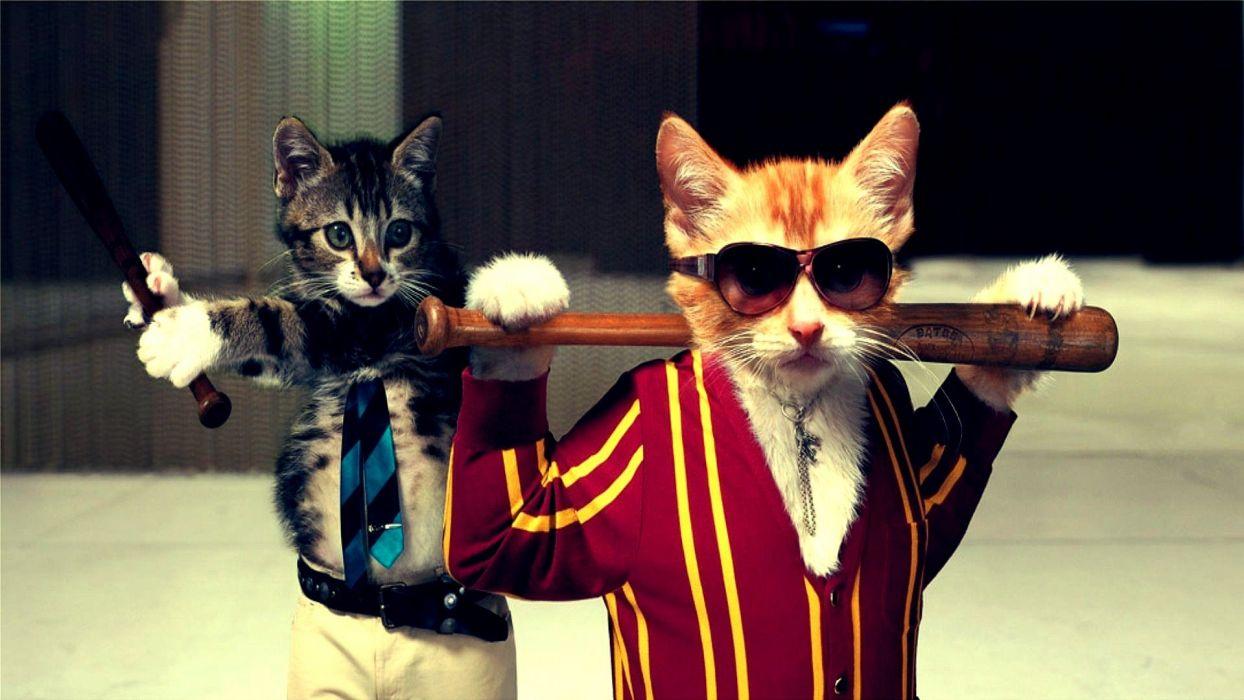 Cat Mafia  wallpaper