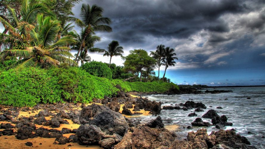 palm trees HDR photography beaches wallpaper