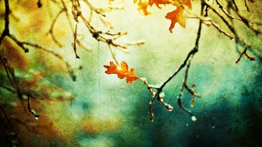 nature autumn grunge sunlight branches wallpaper