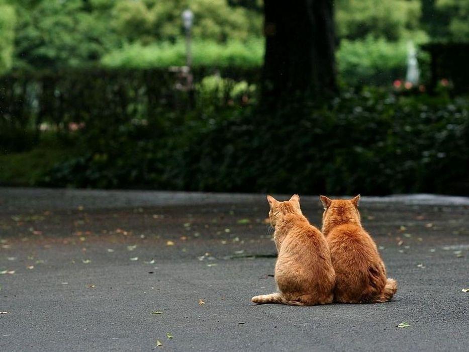 cats animals friends kittens wallpaper