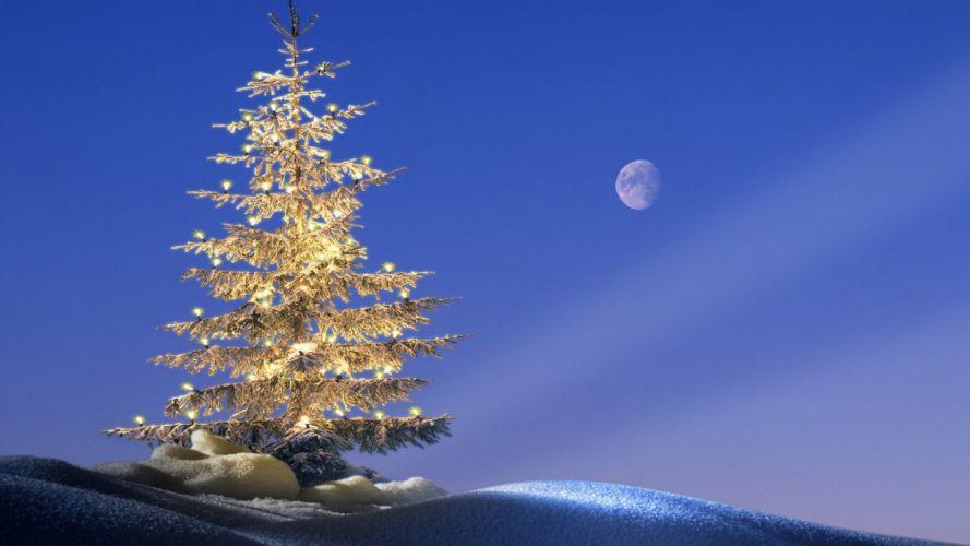 trees Germany Christmas Bavaria wallpaper