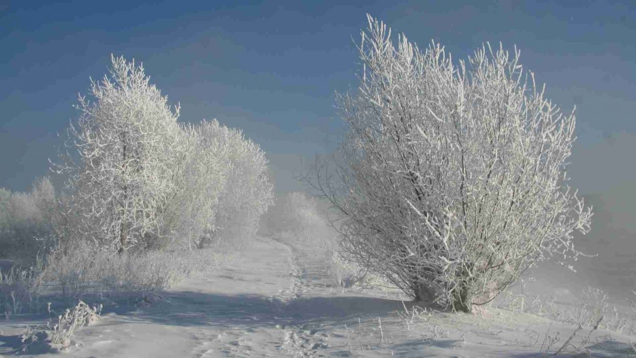 landscapes nature paths shadows Snow White bushes hoarfrost wallpaper