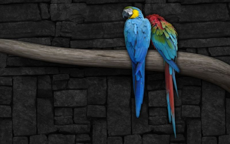 birds wildlife wallpaper