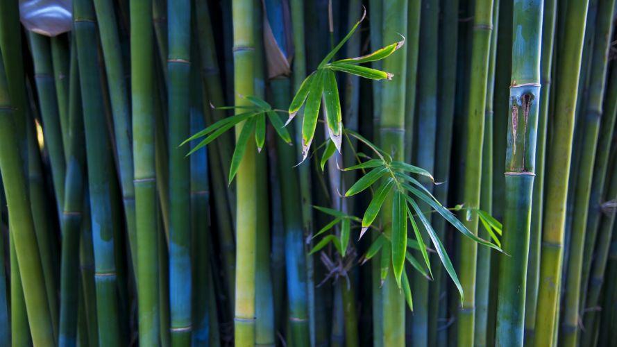 nature bamboo wallpaper