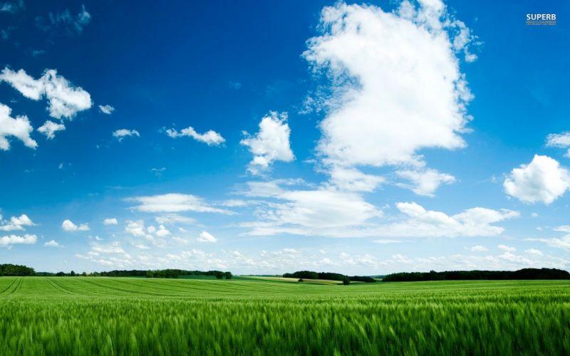 green skies wallpaper