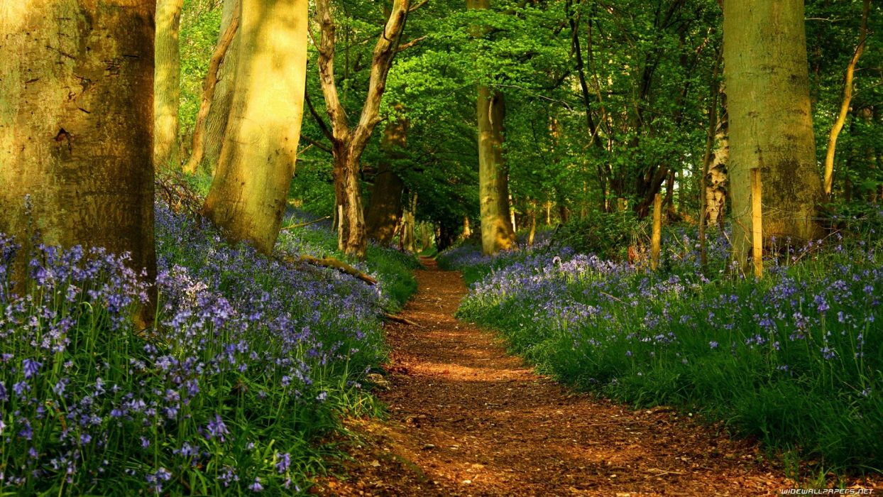 trees forests paths wallpaper