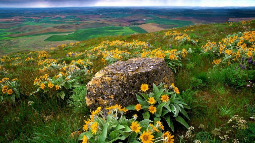 flowers fields rocks Country Washington farm yellow flowers Palouse wallpaper