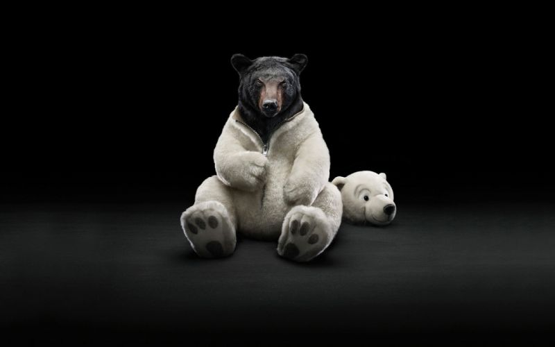costume animals funny bears wallpaper