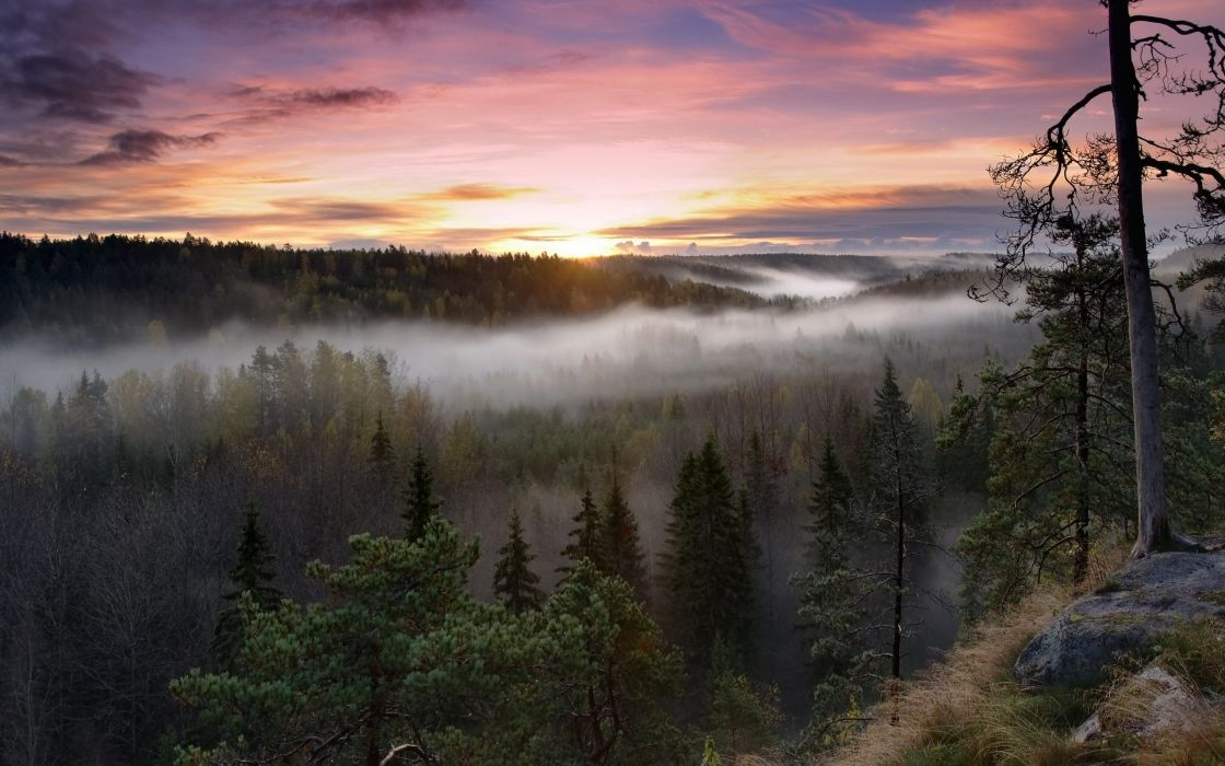 sunrise landscapes nature trees dawn forests hills fog mist Finland HDR photography wallpaper