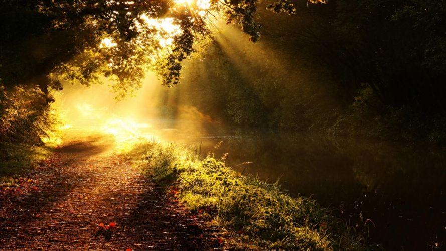 forests paths golden sunlight morning creek wallpaper