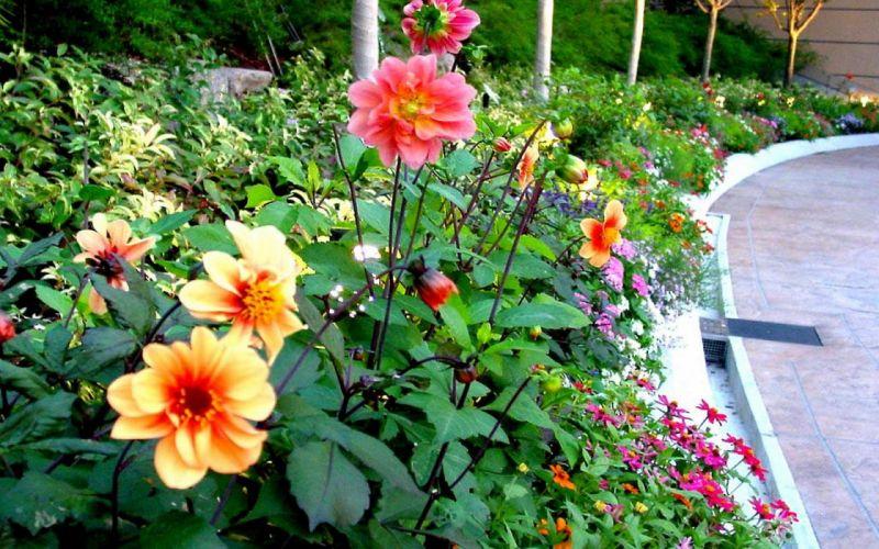 Japan flowers wallpaper