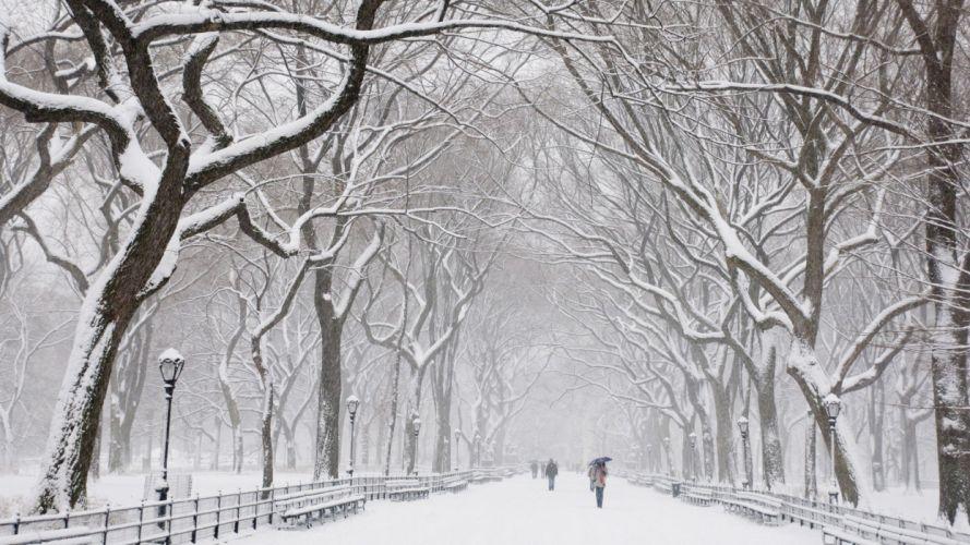 snow trees Central Park wallpaper