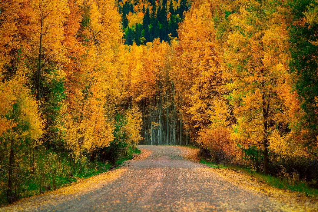 autumn trees forest road nature wallpaper