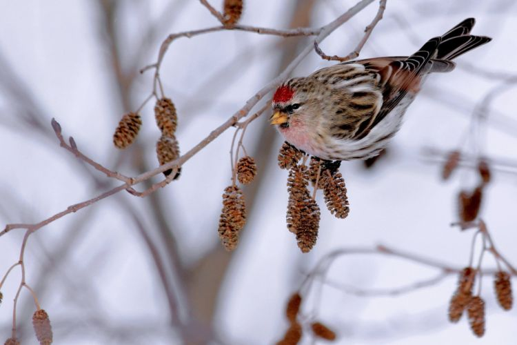 branch bird winter wallpaper