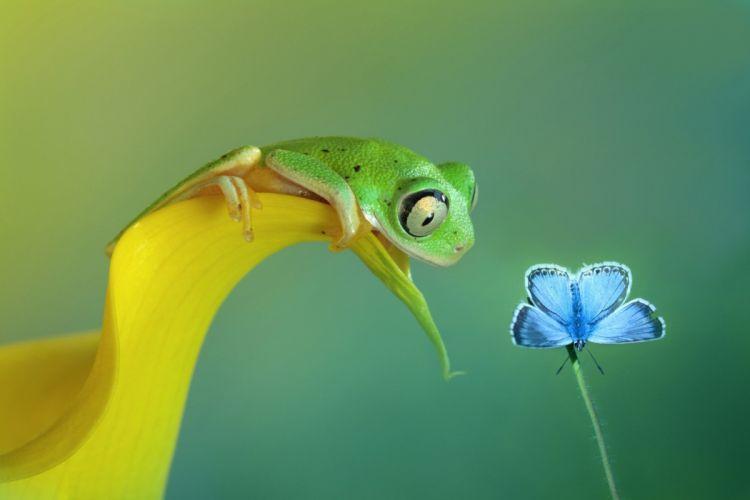 butterfly frog bokeh wallpaper