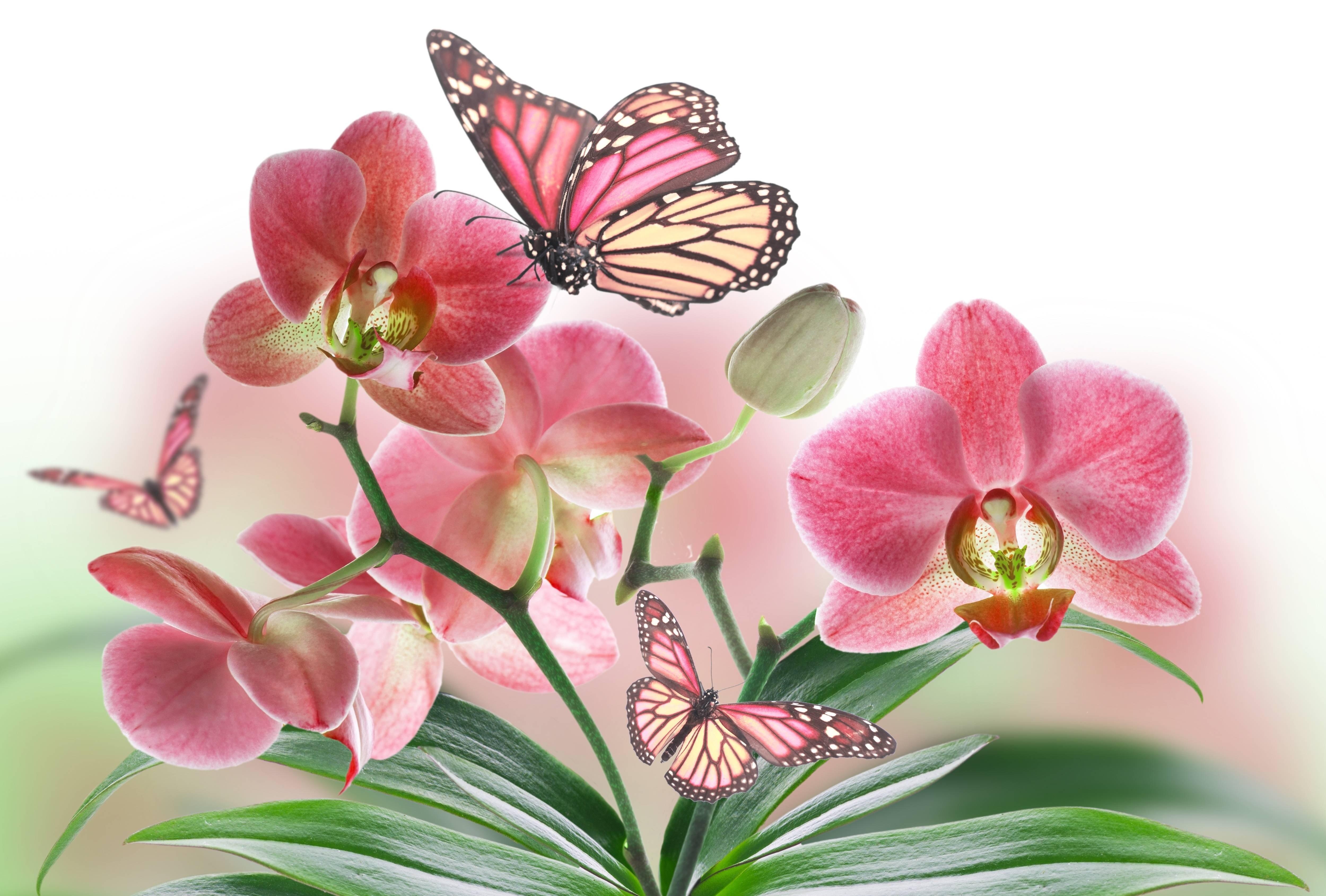 flowers butterflies butterfly soft bokeh j wallpaper 5000x3380