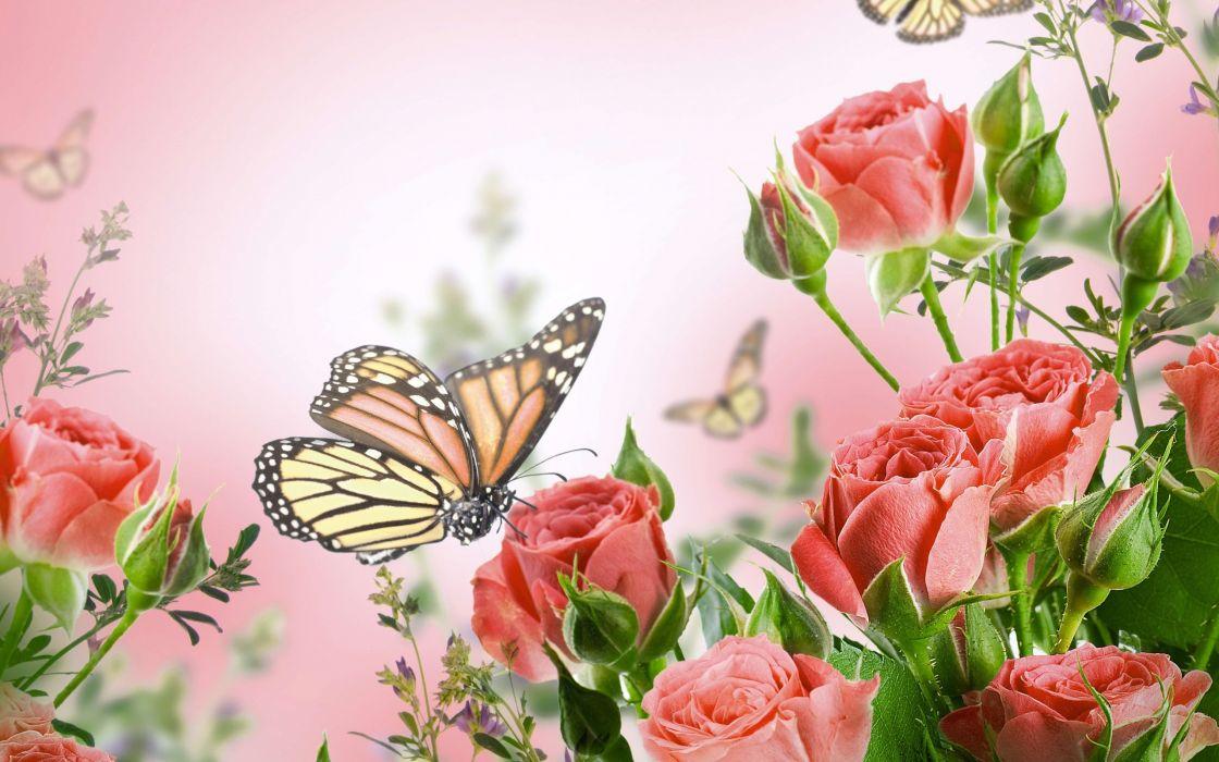 Wall Paper Wide Pink Rose Colours Soft Nature Flower: Flowers Butterflies Butterfly Soft Bokeh J Wallpaper