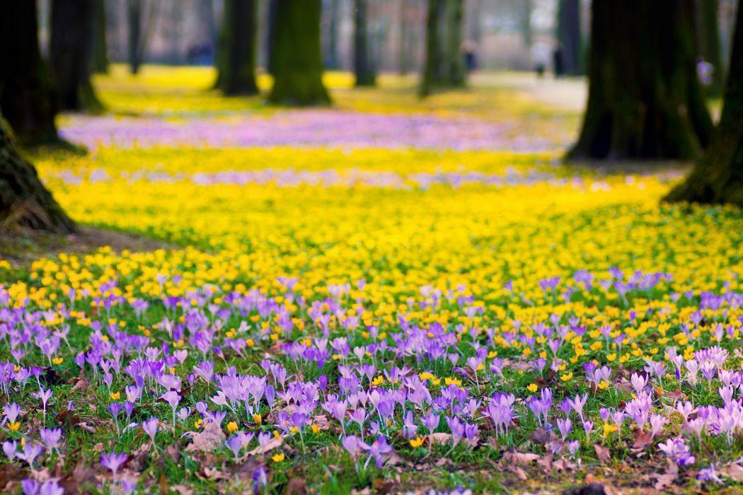 Flowers crocus yellow purple wallpaper 2000x1333 309722 flowers crocus yellow purple wallpaper mightylinksfo