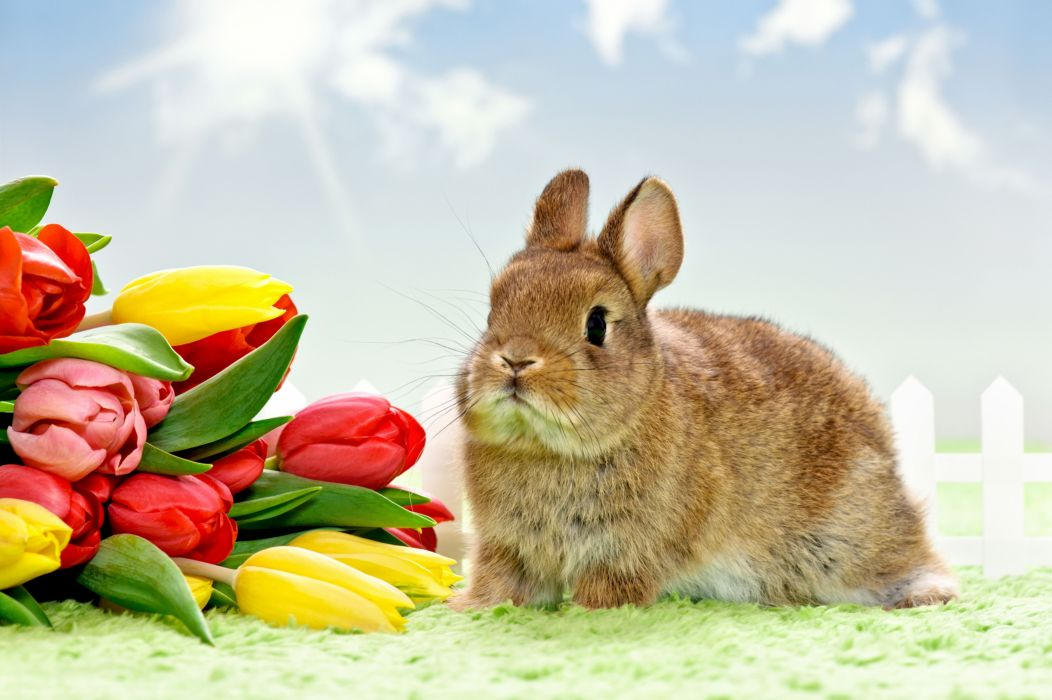 flower rabbit easter wallpaper