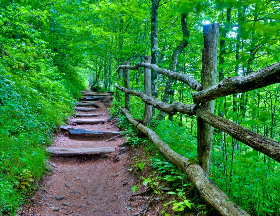 forest path steps trees nature   f wallpaper