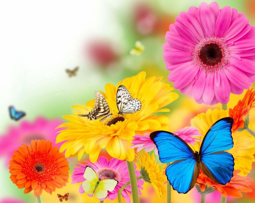 Gerberas Butterflies Flowers Butterfly Bokeh Summer Spring Wallpaper