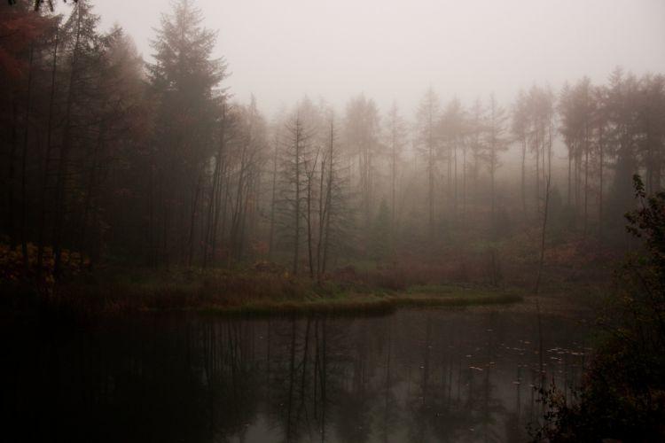 lake forest fog mist wallpaper