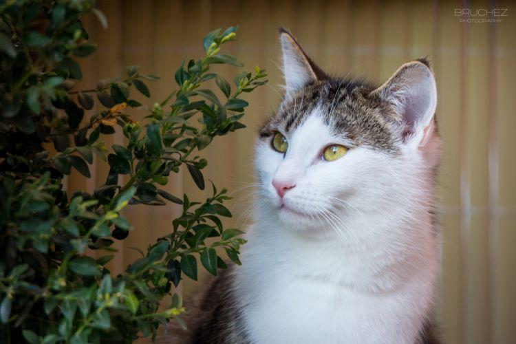 lazy cat muzzle foliage wallpaper