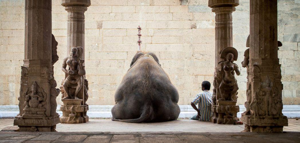 man elephant india vacation wallpaper