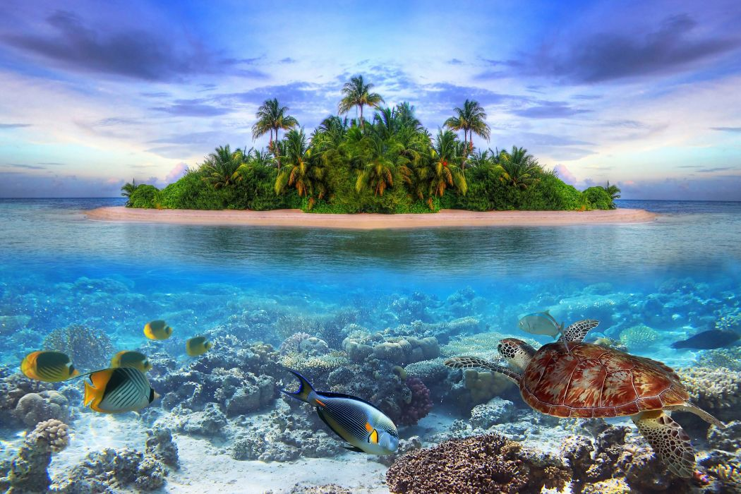 Marine life on a tropical island in the Maldives ocean sea fish underwater wallpaper