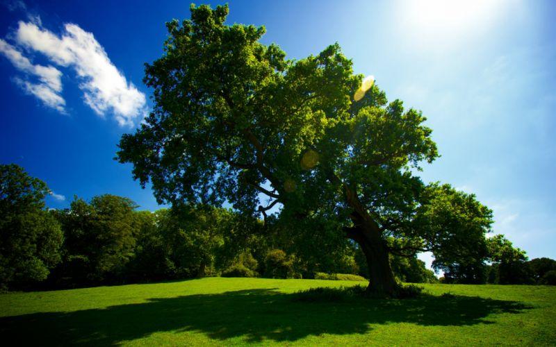 Nature tree grass meadow sun sky trees summer wallpaper