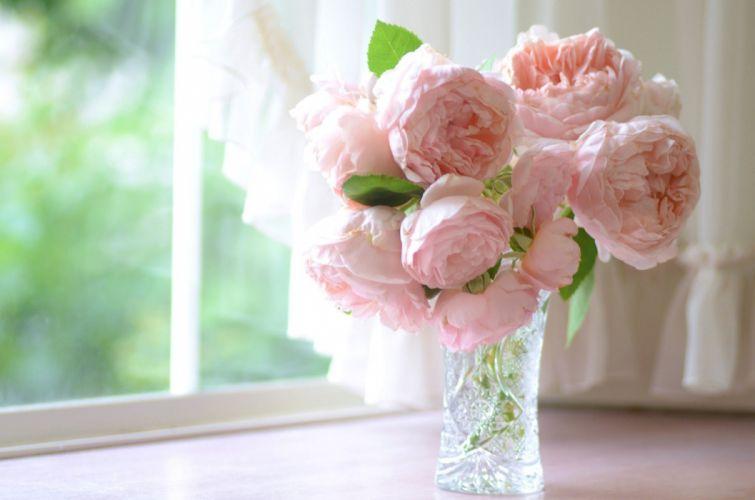 pink buds petals roses bokeh wallpaper