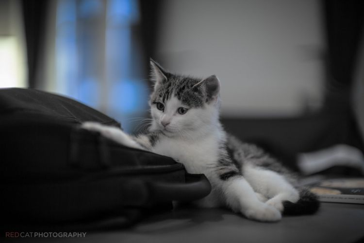 play kitten cat wallpaper