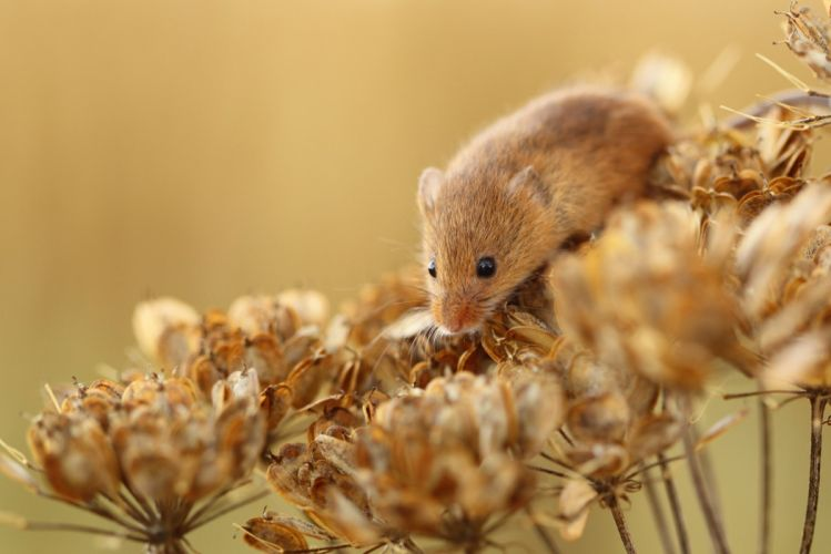red dry plant mouse flowers wallpaper