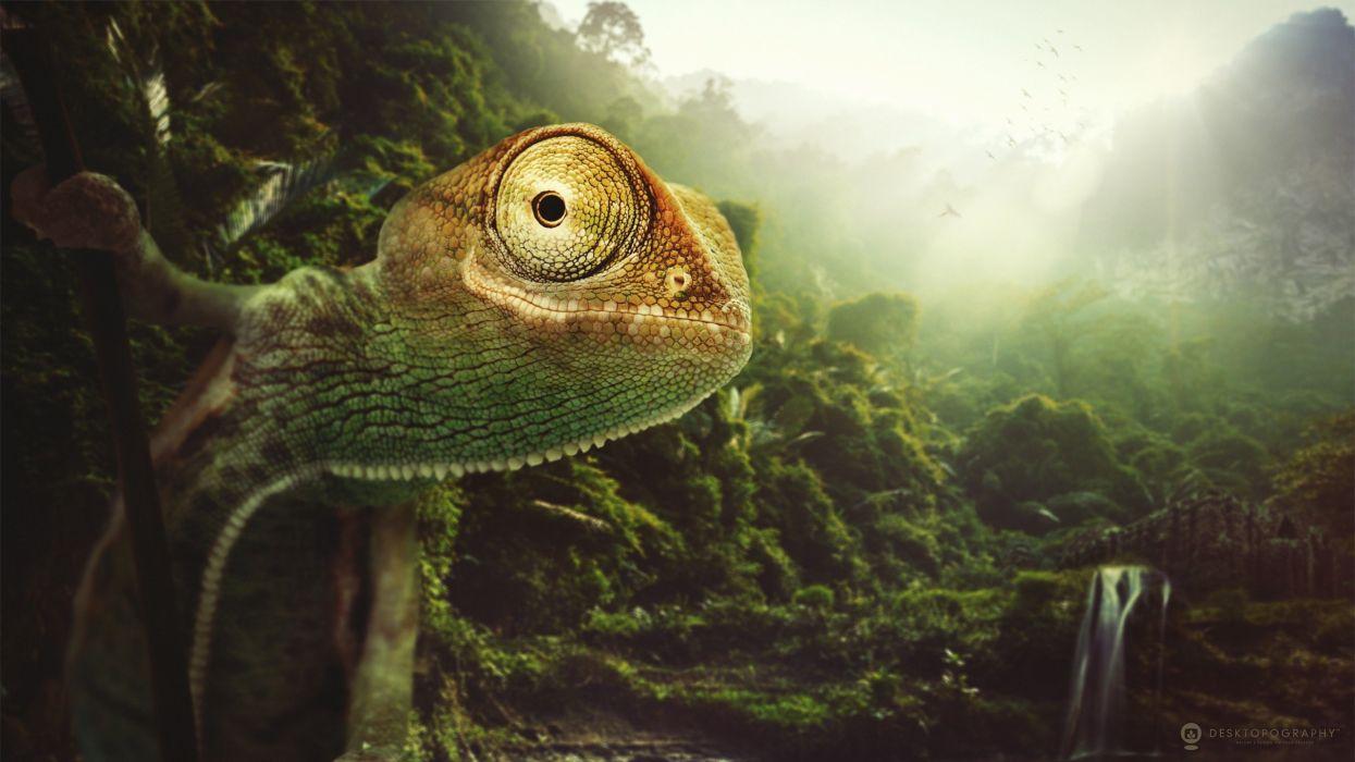 Reptile Forest Chameleon Animals jungle artwork lizard wallpaper