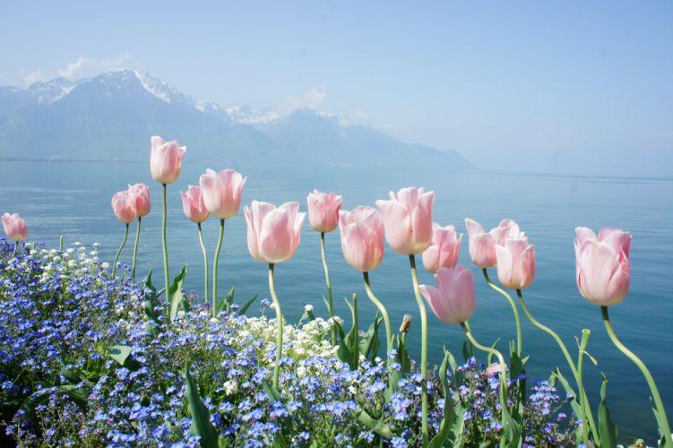 spring flowers tender mountains water wallpaper