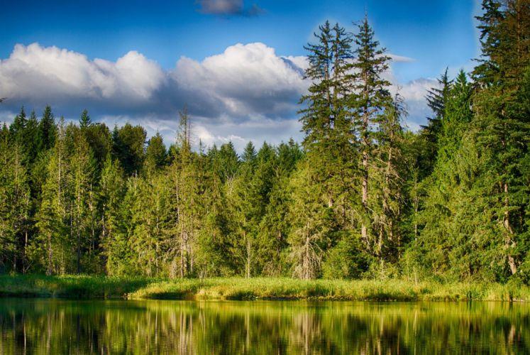 summer forest lake reflection wallpaper