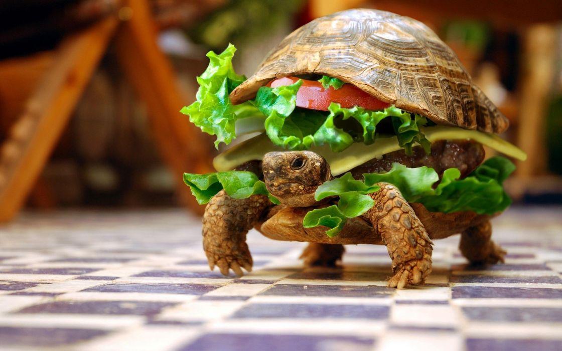 turtle burger bun hamburger funny humor photoshop wallpaper