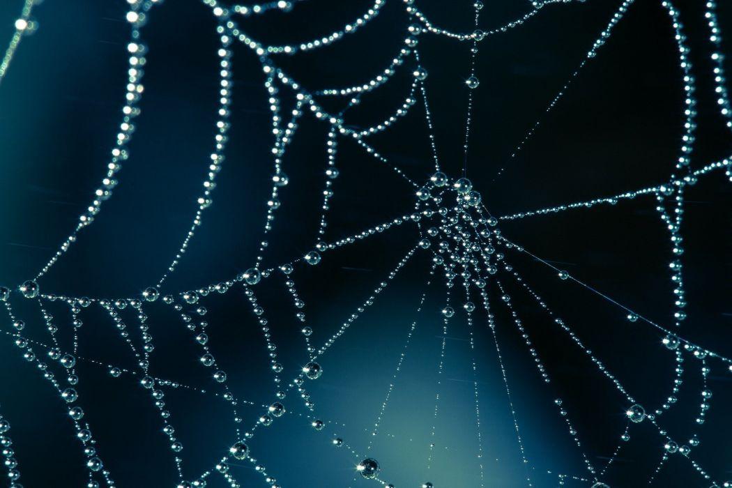 web drops macro shiny bokeh spider spiderweb wallpaper