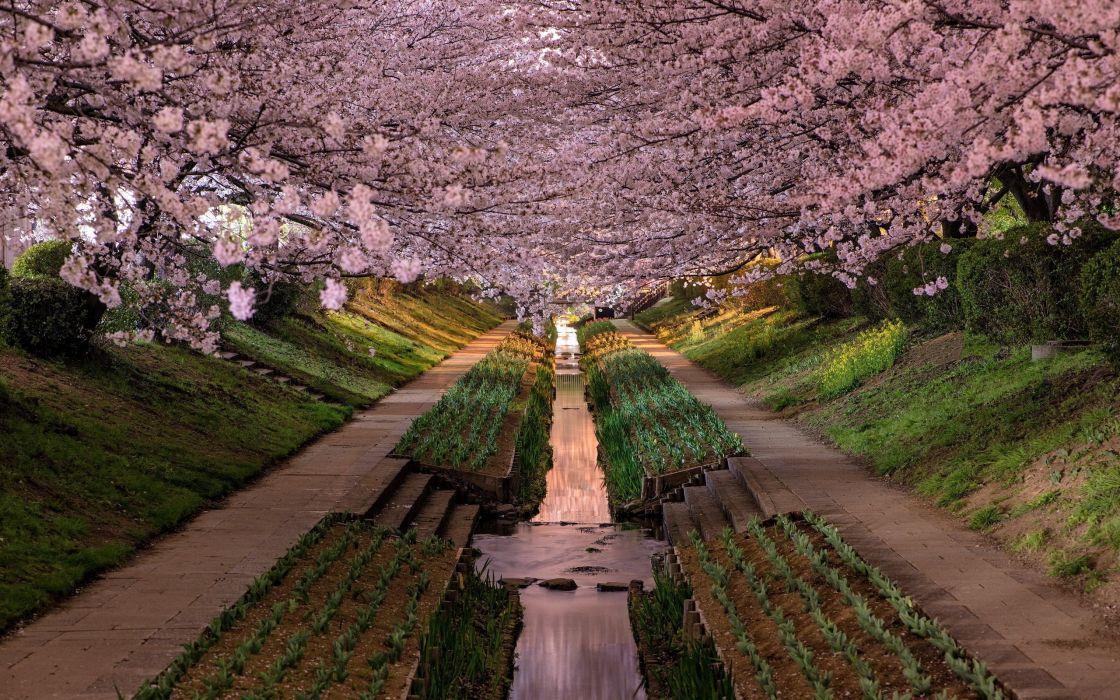 yokohama garden blossom flower park wallpaper