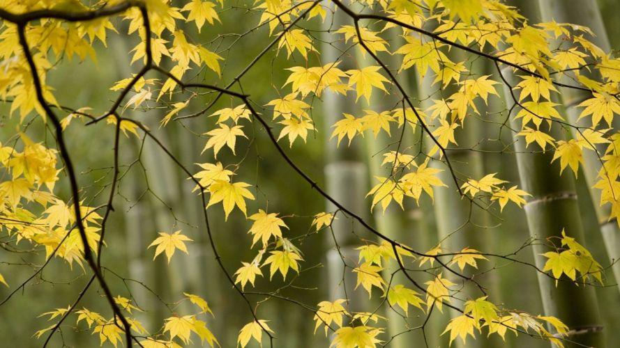 Japan autumn Kyoto wallpaper
