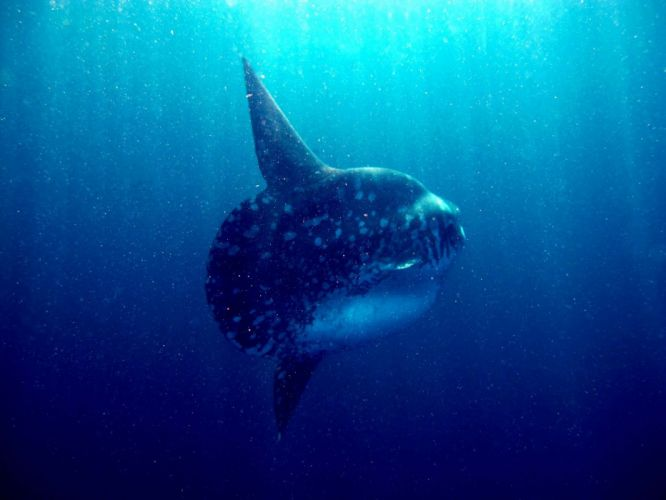 water ocean sharks wallpaper