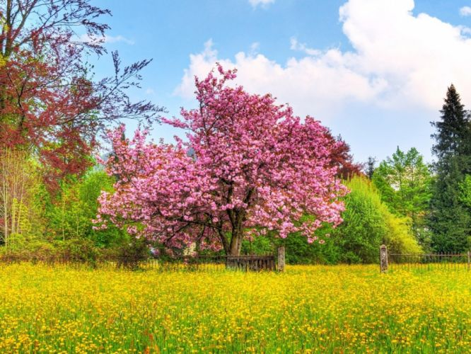 nature trees fields spring wallpaper