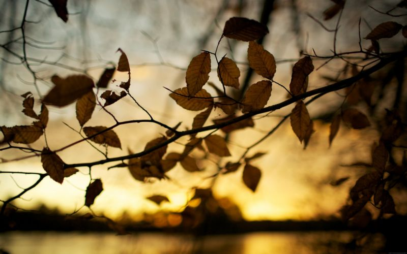 sunset autumn leaves brown depth of field blurred background wallpaper