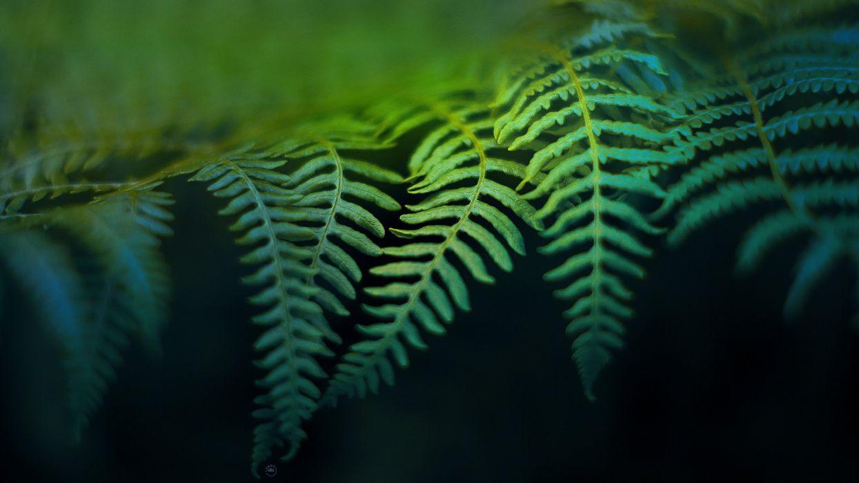 leaves ferns wallpaper