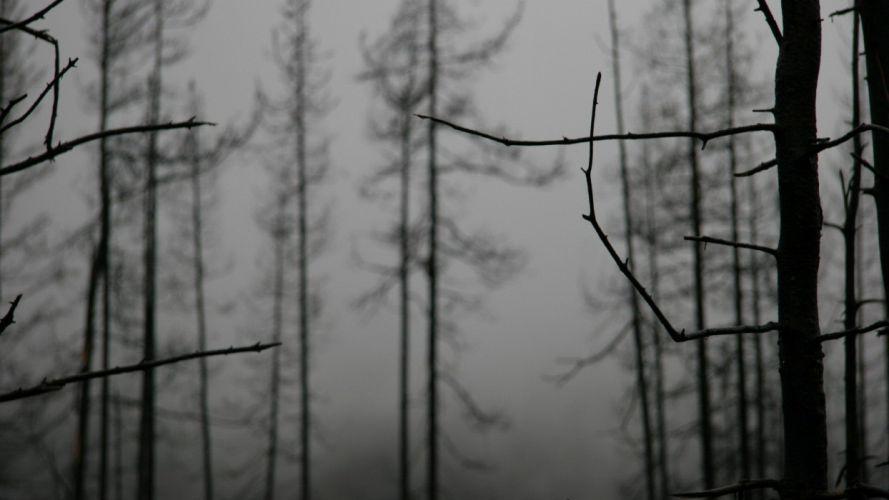 nature fog wallpaper