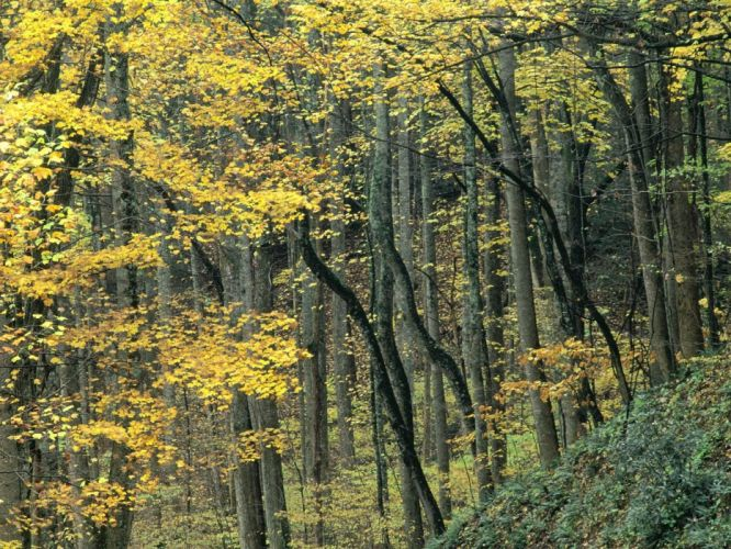 mountains nature autumn forests Tennessee wallpaper
